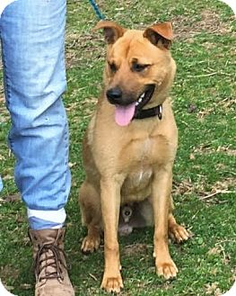 German Shepherd Dog Mix Dog for adoption in Hillsborough, New Mexico - Jax