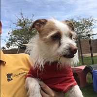 Adopt A Pet :: Freddie - Palm Desert, CA