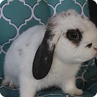 Adopt A Pet :: Murphy - Hillside, NJ