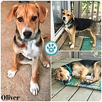 Adopt A Pet :: Oliver - Kimberton, PA