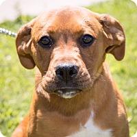 Adopt A Pet :: Staci - Hershey, PA