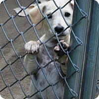 Adopt A Pet :: BARTHOLOMEW - Williston Park, NY