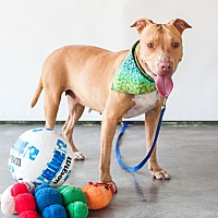 Adopt A Pet :: Gypsy - Vancouver, BC