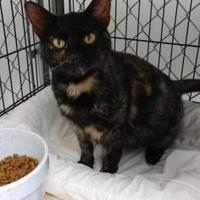 Adopt A Pet :: Clarice - Decatur, IL