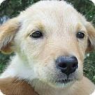 Adopt A Pet :: Summer