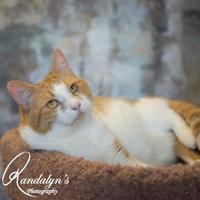 Adopt A Pet :: Faye - Greenville, IL