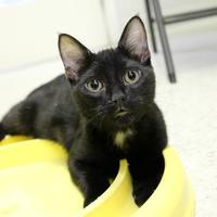 Adopt A Pet :: Magic - St. Petersburg, FL