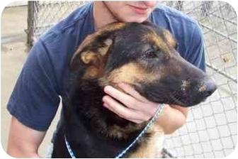 German Shepherd Dog Dog for adoption in Terre Haute, Indiana - Jackie