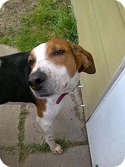 Treeing Walker Coonhound Mix Dog for adoption in Ocean Springs, Mississippi - Tucker