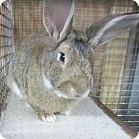 Adopt A Pet :: Walter - Williston, FL