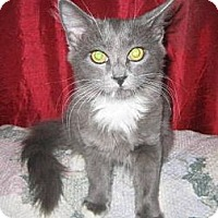 Adopt A Pet :: Spooky - Chandler, AZ