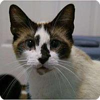 Adopt A Pet :: Sara - Xenia, OH
