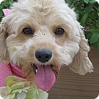 Adopt A Pet :: **STELLA** - Stockton, CA