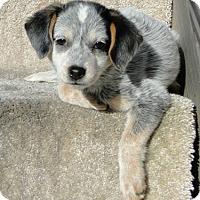 Adopt A Pet :: Sophie - Beachwood, OH