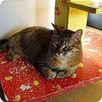 Domestic Shorthair Cat for adoption in Belleville, Michigan - Flex