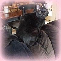 Adopt A Pet :: Teena - Audubon, NJ