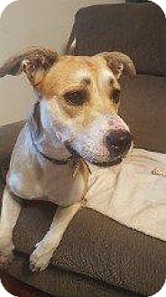 Labrador Retriever Mix Dog for adoption in Hampton, Virginia - CHLOE