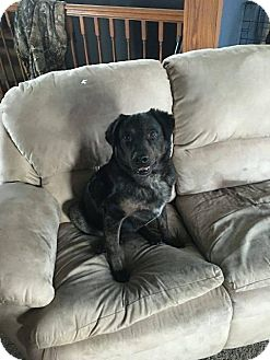 Rottweiler/Flat-Coated Retriever Mix Dog for adoption in Tomah, Wisconsin - Ethan