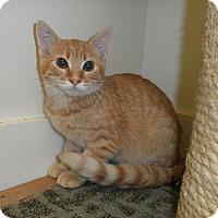 Adopt A Pet :: Kia - Milwaukee, WI