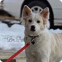 Adopt A Pet :: Tinkerbelle - Calgary, AB