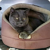 Adopt A Pet :: Smokey - Washingtonville, NY