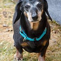Adopt A Pet :: Stewart - Anaheim, CA