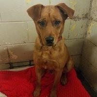 Retriever (Unknown Type) Mix Dog for adoption in Aberdeen, South Dakota - Emmett