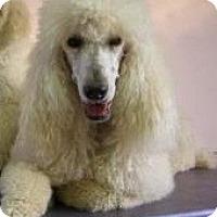Adopt A Pet :: Francheska - Bentonville, AR