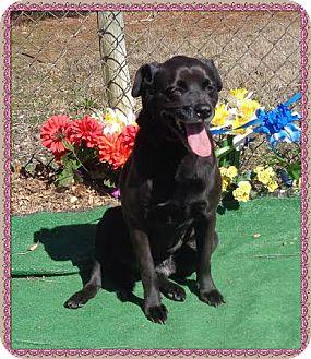 Labrador Retriever Mix Dog for adoption in Marietta, Georgia - ZENA (R)