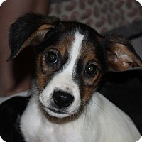 Adopt A Pet :: Ash - in Maine - kennebunkport, ME