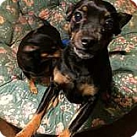 Adopt A Pet :: Willie - Syracuse, NY