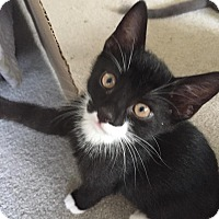 Adopt A Pet :: Leo - Turnersville, NJ