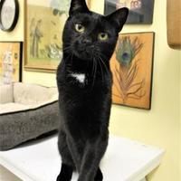 Adopt A Pet :: Huey - Lynchburg, VA