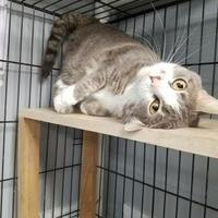 Adopt A Pet :: Miss Kitty - Carroll, IA