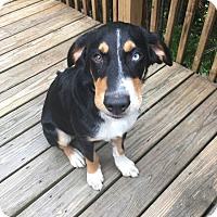 Adopt A Pet :: Spencer - Florence, KY