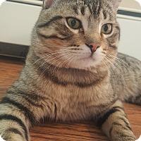 Adopt A Pet :: Muskegon - Oakland, MI