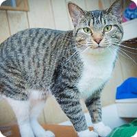 Adopt A Pet :: Perdie - Corinne, UT