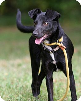 Dachshund/Rat Terrier Mix Dog for adoption in Burbank, Ohio - Dixie