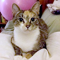 Adopt A Pet :: Chloe - Durham, NC