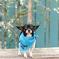 Adopt A Pet :: Timmy Chi - Pacific Grove, CA