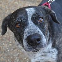Adopt A Pet :: Cora - Atlanta, GA