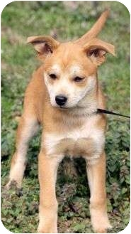 Siberian Husky Mix Puppy for adoption in Foster, Rhode Island - Annabell