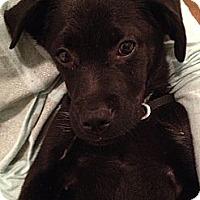 Adopt A Pet :: Boston - Burton, OH