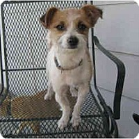 Adopt A Pet :: Allie - YERINGTON, NV