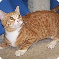 Adopt A Pet :: Marigold - Colorado Springs, CO