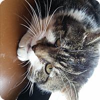 Adopt A Pet :: Moe (SO) - Little Falls, NJ