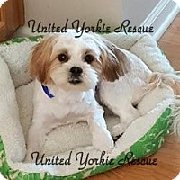 Adopt A Pet :: Teddy - Indianapolis, IN