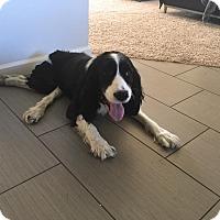 Adopt A Pet :: Lyla - Phoenix, AZ