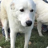 Adopt A Pet :: Jasmine - Kyle, TX