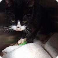 Adopt A Pet :: Kiko (Petvalu) - Trenton, NJ
